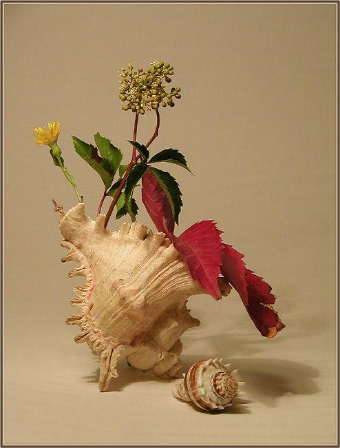 Stillife with seashelf