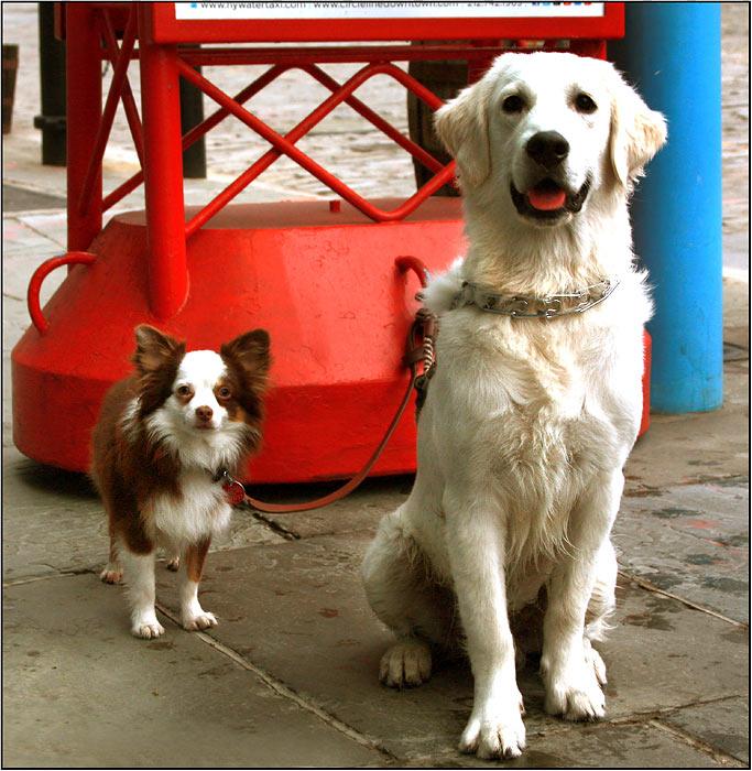 Manhattan dogs